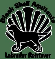 Black Shell Aquitanis