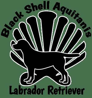 Black Shell Aquitanis Labrador Retriever